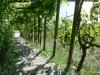 Weinlaubengang